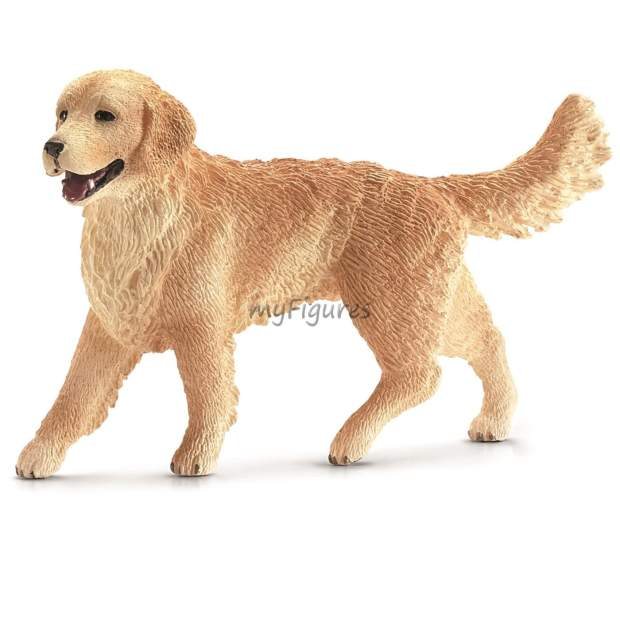 Golden Retriever Hündin