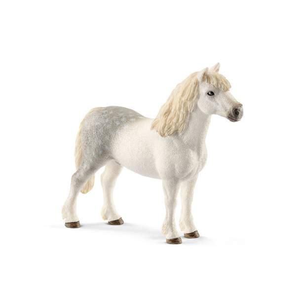 Welsh-Pony Hengst