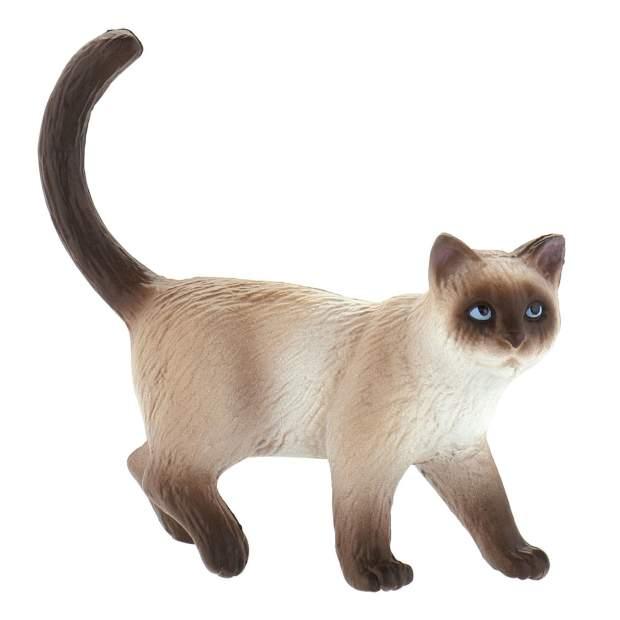 Domestic Cat Kimmy