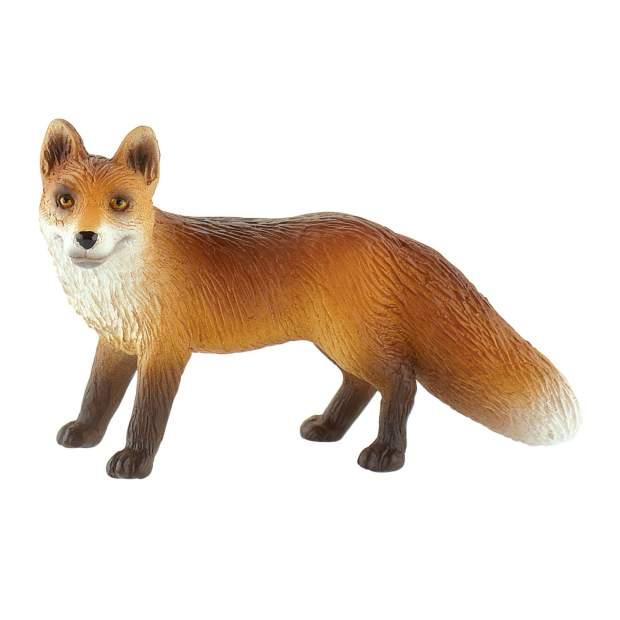 Wild - Fuchs