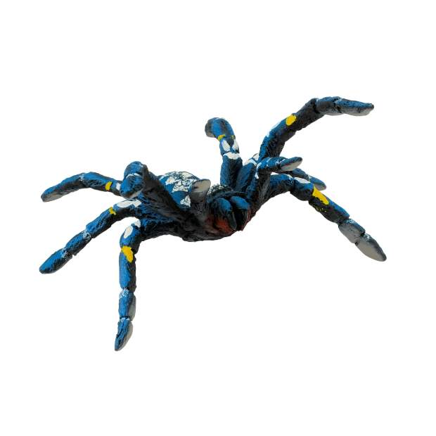 Blue ornamental Tarantula