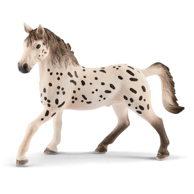 Knapstrupper stallion