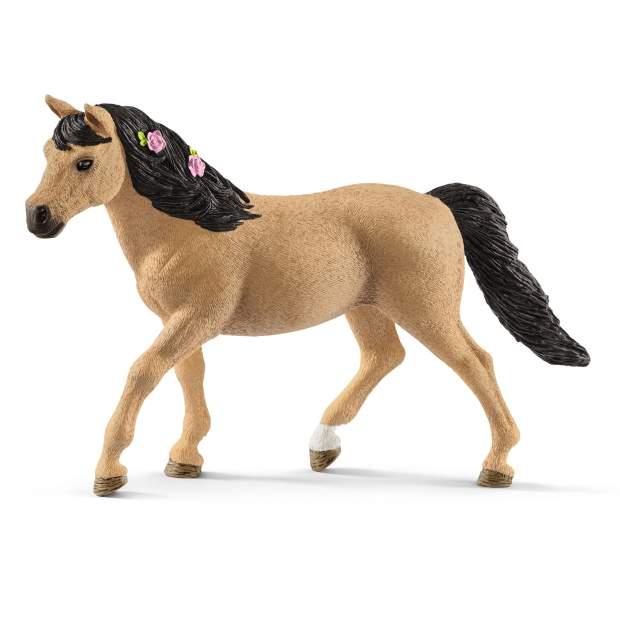 Connemara Pony Stute