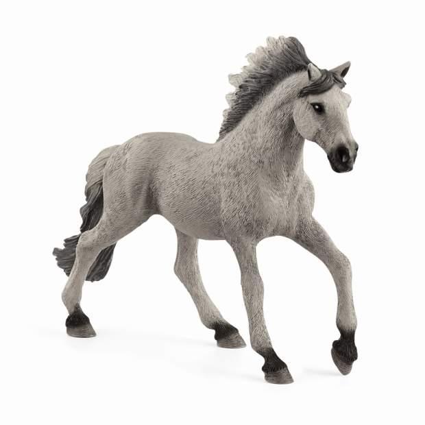 Sorraia Mustang Hengst
