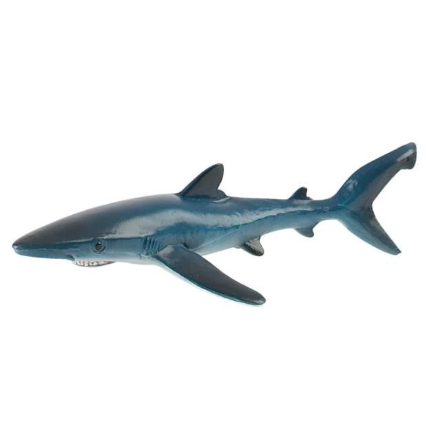 Wild - Blauhai