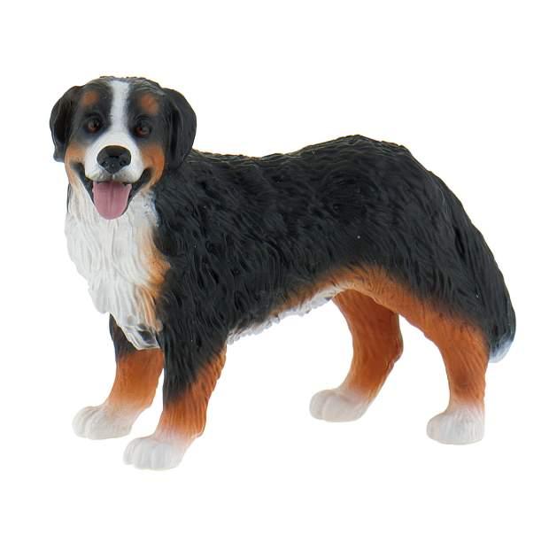 Farm - Berner Sennenhund Bianca