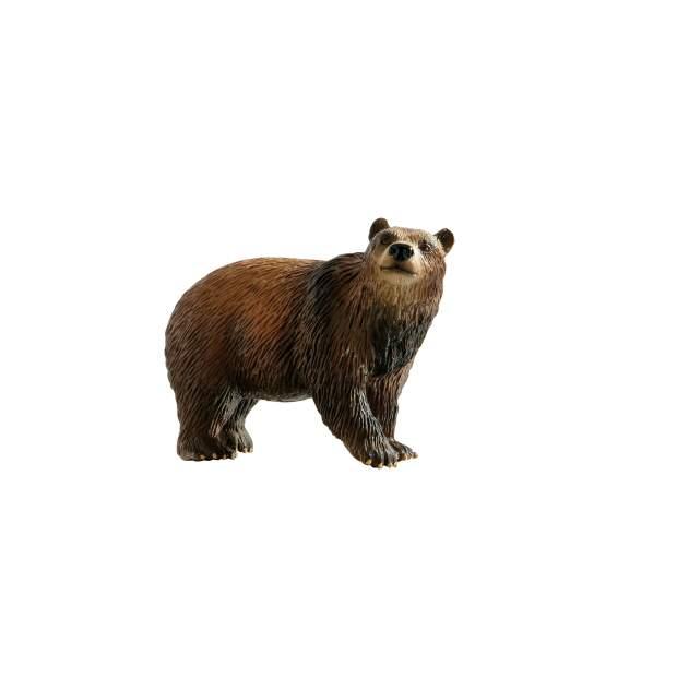 Wild - Braunbär