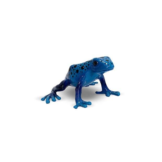 Wild - Baumsteigerfrosch Azureus