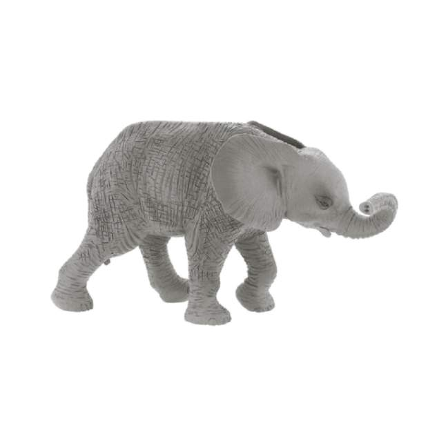 Wild - Afrikanisches Elefantenkalb
